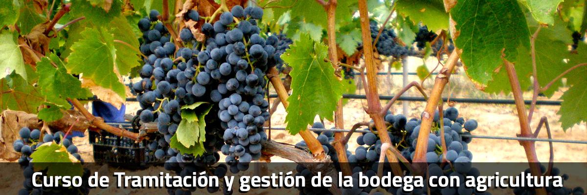 curso-vitivinicola-tramitacion-gestion-bodega-agricultura
